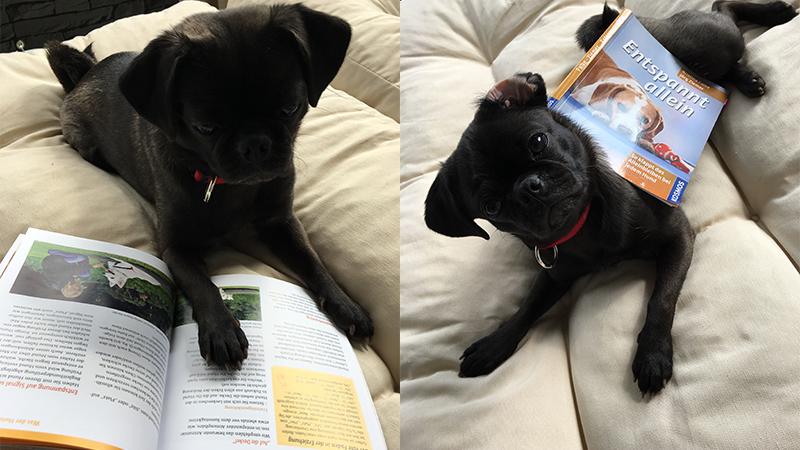 Entspannt Alleine - Mein Hund kann nicht alleine bleiben