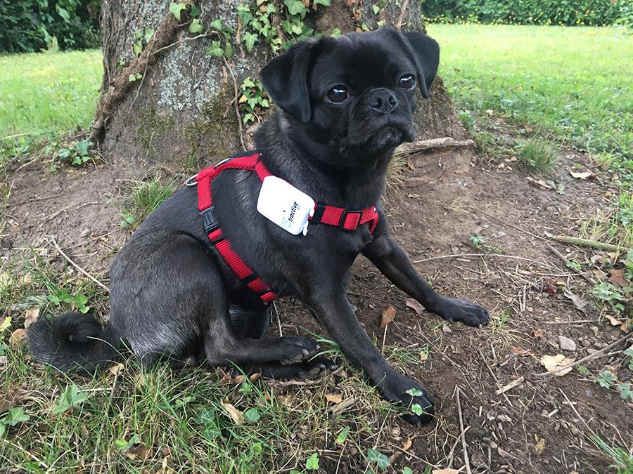 GPS Tracker für kleine Hunde