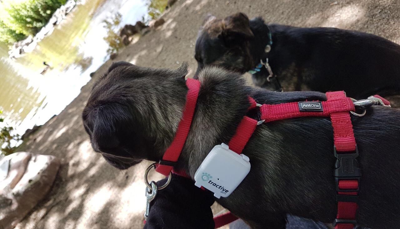 tractive GPS PET TRACKER - GPS für Hunde