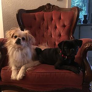 Loki und Shae zuhause