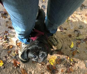 Hundemami der Weg in die Verwahrlosung
