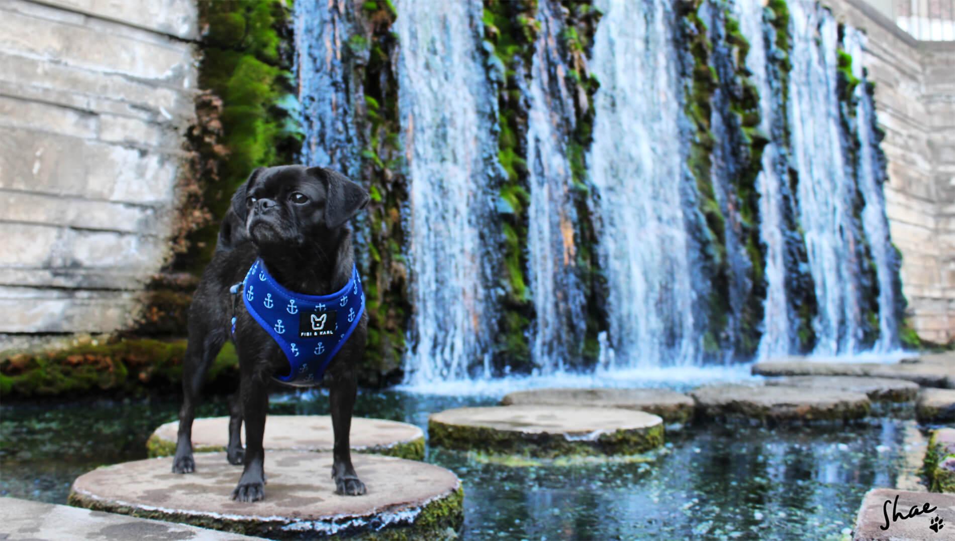 Halsband oder Geschirr - was trägt dein Hund