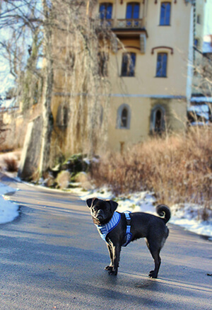 Hundegeschirr von Fibi und Karl