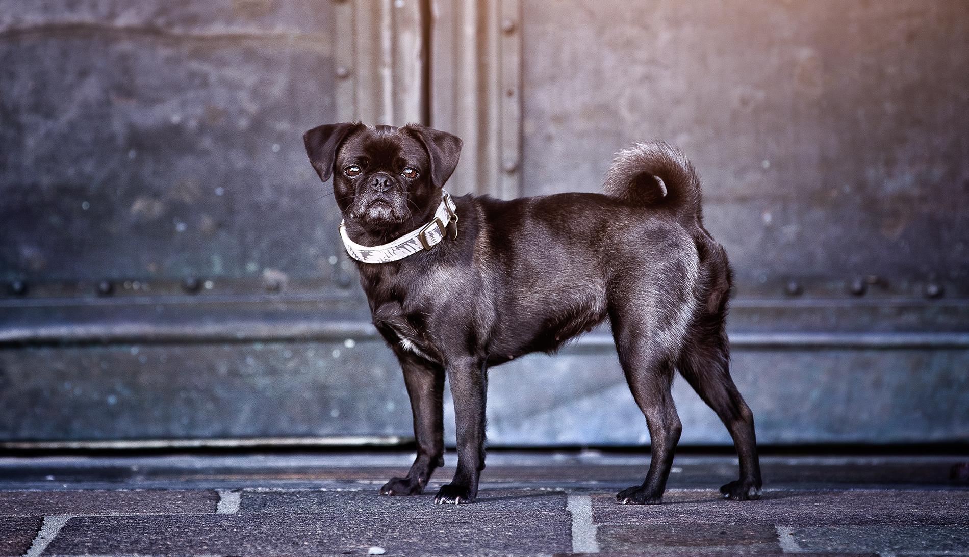 Der Eigentlich Hund