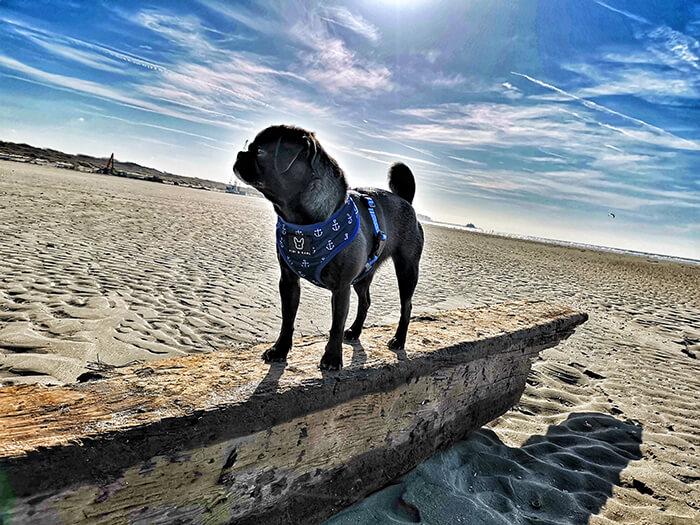 Hundestrand Zeebrügge
