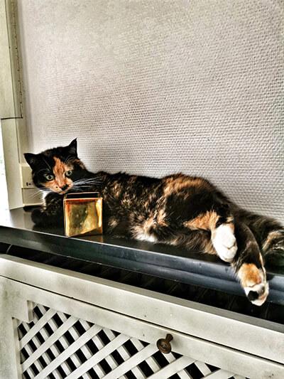 Katze im Hotel Fleur de Lys