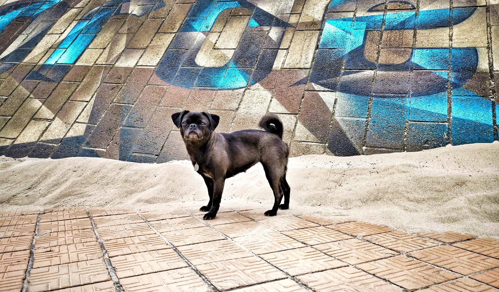 Mit Hund in Belgien