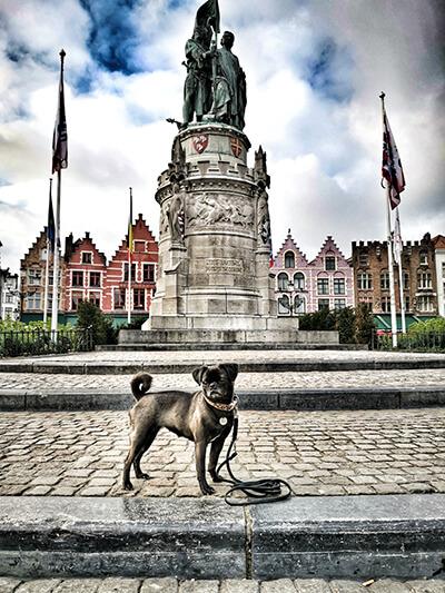 Mit Hund in Brügge