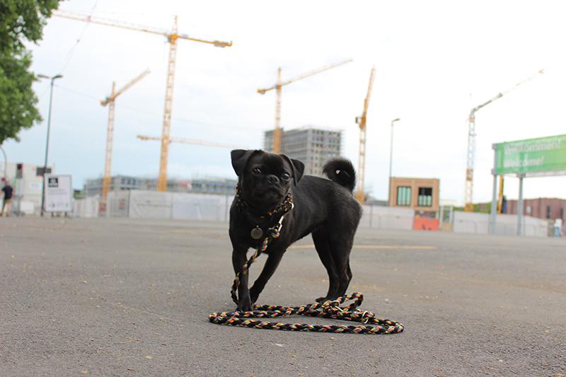 Baustelle Hund - Hundeerziehung